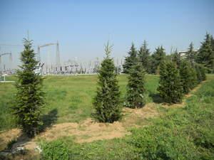 Mitigazione Ambientale 3